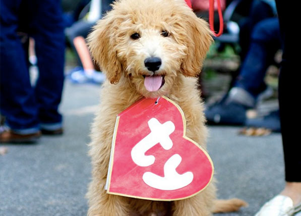Beanie Baby http://www.purewow.com/entertainment/20-Ways-to-Dress-Up-Your-Dog-This-Halloween