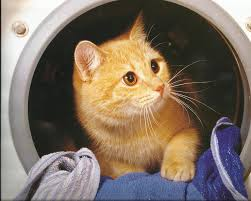 http://animalwall.xyz/kitten-dryer-cute-paws-cat-photo-gallery/