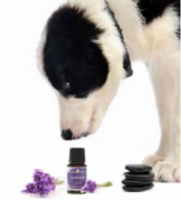 http://www.wholedognews.com/using-essential-oils-pets/