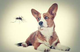 http://insectcop.net/do-mosquitoes-bite-dogs/