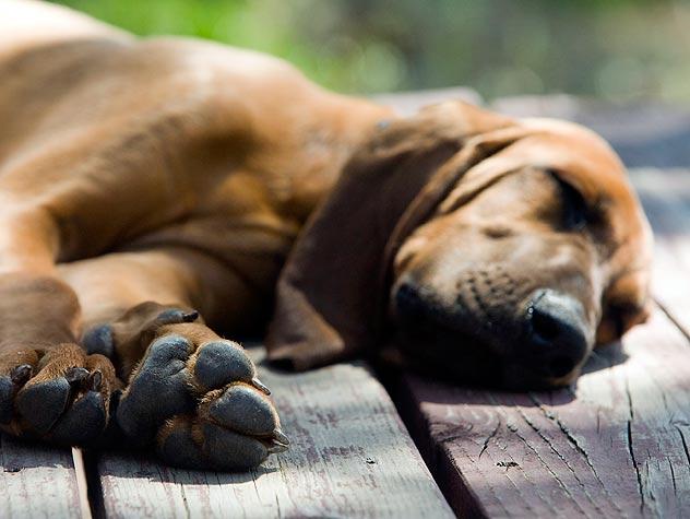 https://www.petfinder.com/wp-content/uploads/2012/11/100590909-464-trim-dogs-nails-632x475.jpg