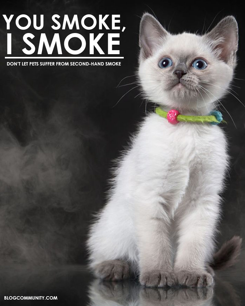http://veterinary.blogcommunity.com/second-hand-smoke-dont-let-pets-suffer/