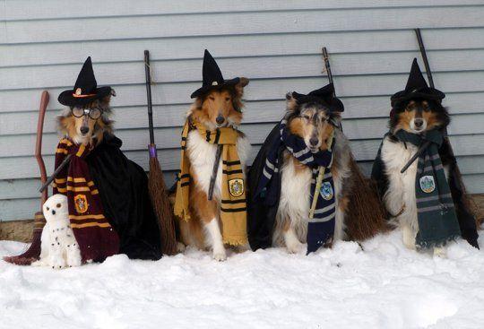 Harry Potter Houses