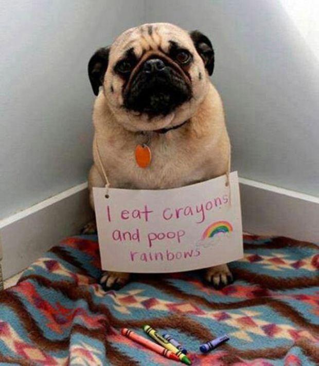 Doggy Emergency!
