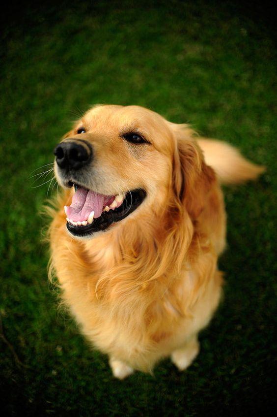 National Pet Dental Health Month