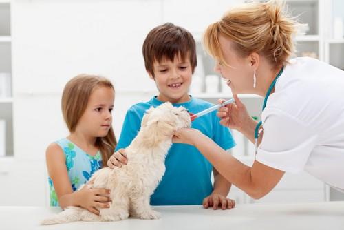 Vaccinations Richmond, TX